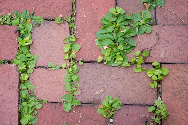 Underfoot - brick sidewalk in Old Philly