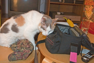 Patches Cozies up to my camera bag - chez Knarf in Toronto Patches caught the scent of some Valerian root I had in the side pocket of my bag