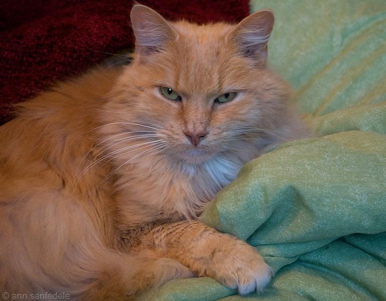 Toby - My friend Alice's cat