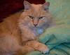 Toby - My friend Alice's cat