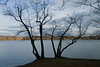 Bare Branches on Jamaica Pond