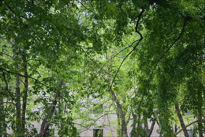 Canopy - outside the Art Institute
