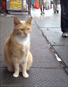 Ginger tabby in Chinatown