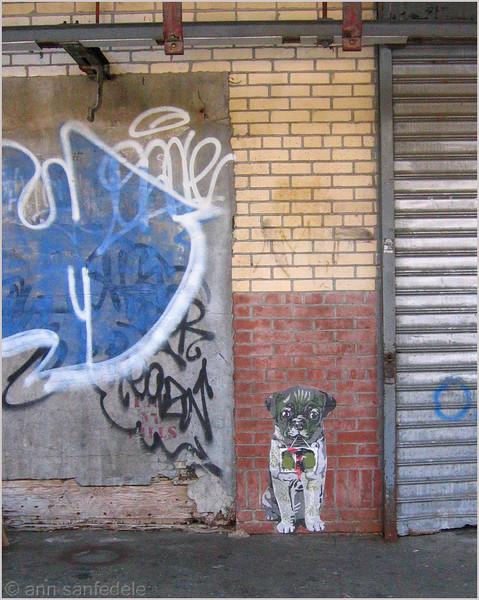 Doggie on Washington street