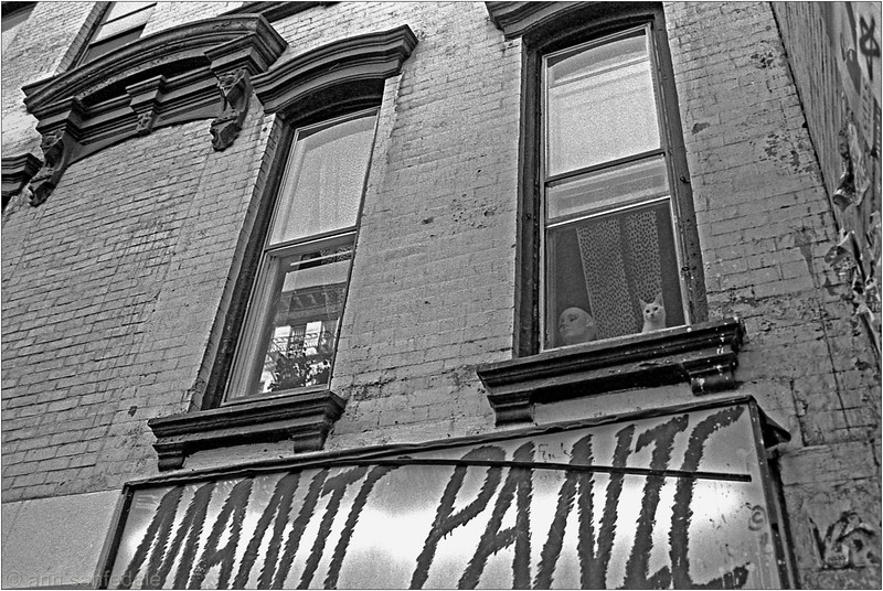 Cat in Window above Manic Panic Store , 33 st. marks Place, 1981 (tx roll 283  frame 21a)