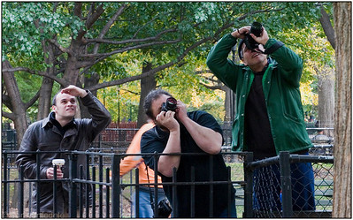 Watch the Birdie - Tompkins Square Park - they are watching a red tail hawk - possibly one of  Pale Male's grandkids, lunch on a pigeon.
