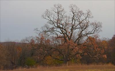 Sue's Tree