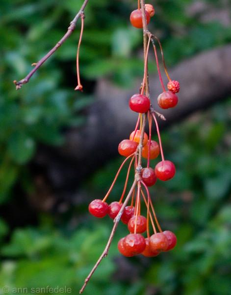 It's the berries