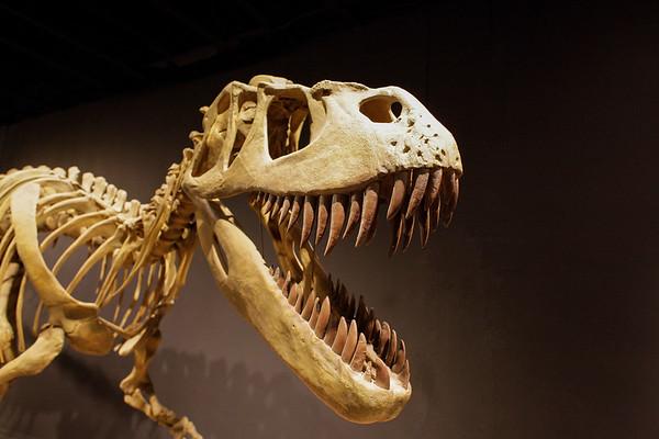 20131004_Dinosaur Museum_0042
