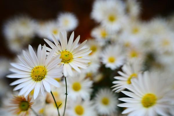 Fall Flowers--Jim Thorpe, PA