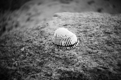 Shell---Falmouth, MA