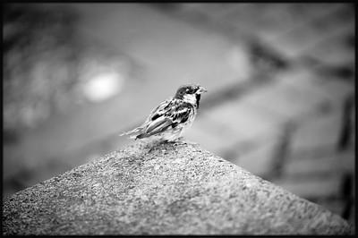 Bird, Paul Revere Park, North End, Boston