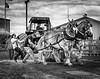 Best of Show Black & White Bethlehem Fair - 2018<br /> Shot at the Bethlehem Fair, 2017.
