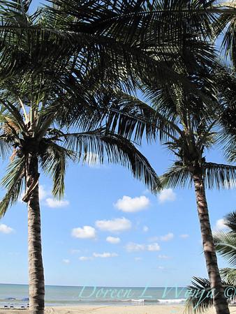 Tropical Landscape_100
