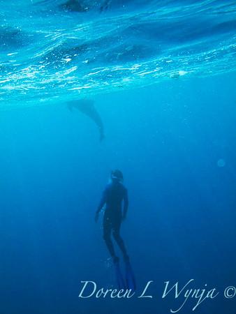 Dolphin Bay_2-09_014_12x