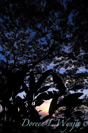 Hawiian sunset - Blue Hawaii_4455