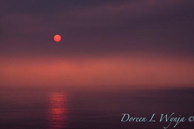 Red Sunset_041