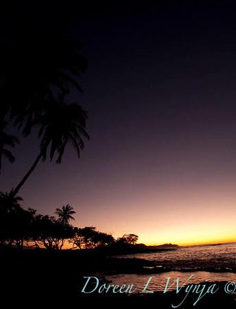 Palm tree sunset_007