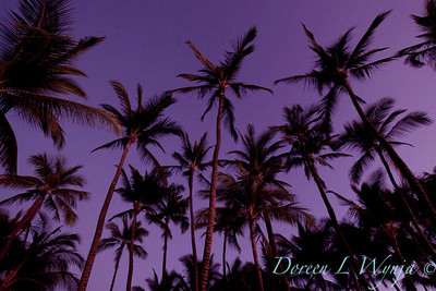 Palm tree sunset_004