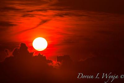 Red Sunset_053