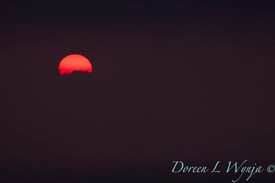 Red Sunset_051