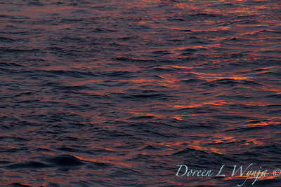 Sailing into the sunset_8071