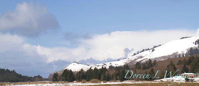 Cascade Head in snow_001