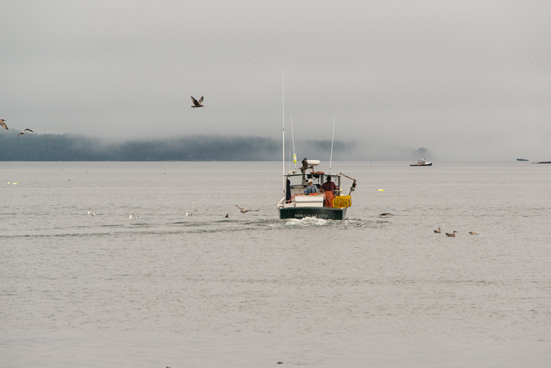 Lobstering in the Maine fog