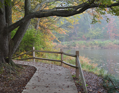 Foggy Color at Franklin Pond
