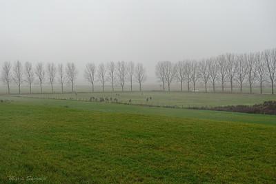 Konik paarden in de regen