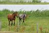Paarden komen ook even kijken