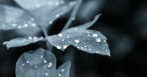 Raindrops in the garden