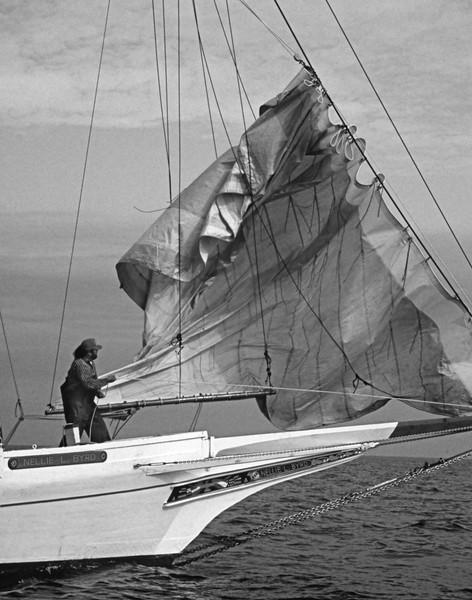 Skipjack Nellie Byrd Crew stows sail
