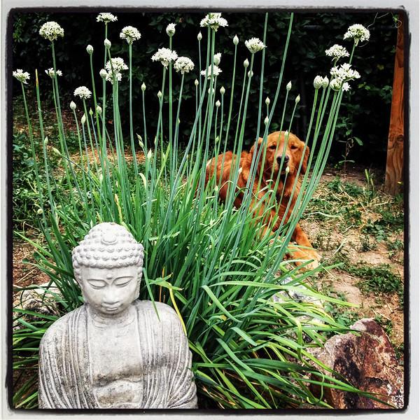 Sitting Buddha hidden dog.