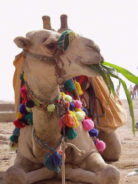 (Oct. 2003 Giza, Egypt)  <br /> Photo: Michael Rieger