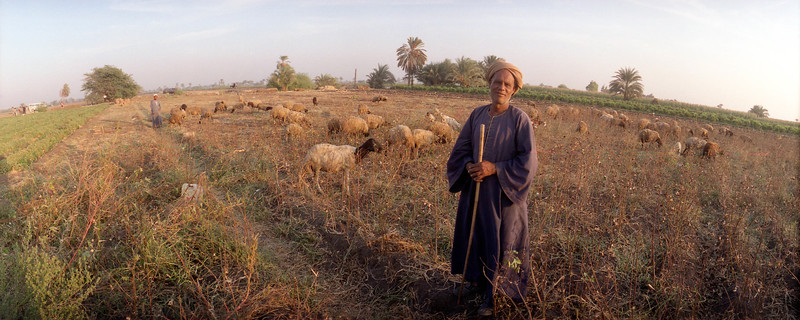 "(Oct 7,2003 Beni Ghani, Egypt) -- A proud Egyptain watches over his sheep just out side of Beni Ghani. <br /> Photo: Michael Rieger<br /> ( <a href=""http://www.newscorps.com"">http://www.newscorps.com</a>)<br /> 720-331-6402"