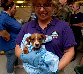 (September 6, 2005 New Orleans) -- Evacuees and their pets receive help at the New Orleans airport where FEMA's D-MATs have set up operations.  Photo: Michael Rieger/FEMA