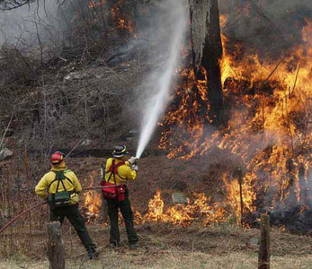 4-25-2002 (Snaking Fire, Bailey Colorado) <br /> Idaho City Hot Shot crews keep a tree from going up in flames as the crew back burns the fire along US 285 just out side of Bailey, Colorado.<br /> <br /> Photo:  Michael Rieger/FEMA