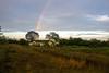 Rainbow on Eduard