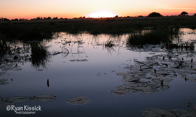 Beautiful sunset over the Botswana wetlands
