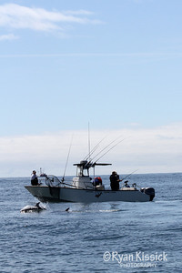 Pacific White-Sided Dolphins surfacing in front of a fishing boat
