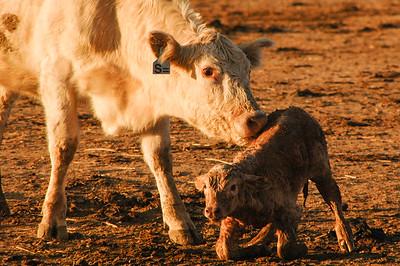 new born (1 of 1)-3
