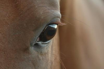 horse eye (1 of 1)