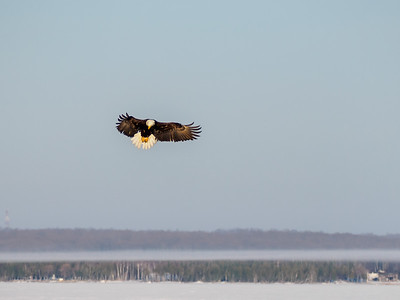 A Failed Eagle Attack, Photos and Video