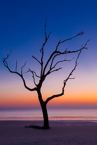 """2017 May-July We Speak for the Trees, """" Sunrise on Driftwood Beach"""""""