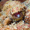 Baya met macro lens, Curacao, Netherlands Antilles