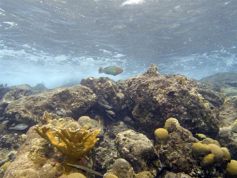 Mari Pampun, Curacao