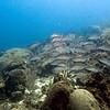Mari Pampun, Curacao, Netherlands Antilles