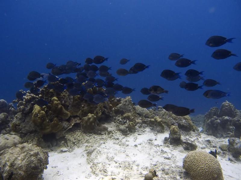 Slangenbaai, Curacao, Nederlandse Antillen