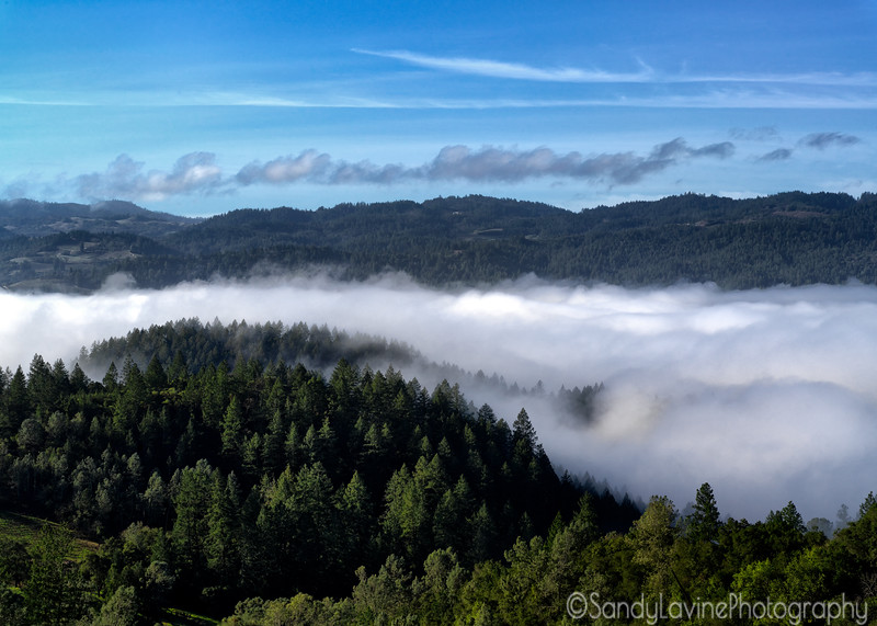 Fog Over Napa Valley